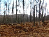 32 +/- Acres Woodlands : Shickshinny : Luzerne County : Pennsylvania