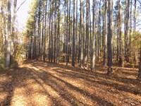 Carolina Recreational Timberland : Wallace : Marlboro County : South Carolina