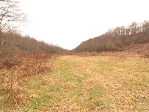 Toker Rd - 63 Acres : Hopedale : Harrison County : Ohio