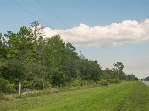 Green Meadow 445 Acres : Okeechobee : Osceola County : Florida