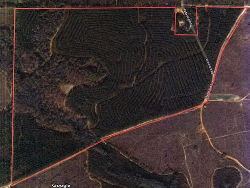115.84 Acre Timber Tract : Elko : Houston County : Georgia