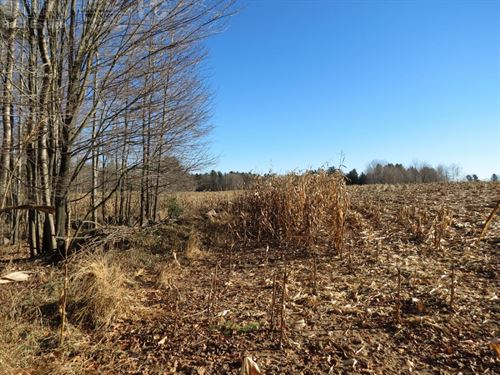 Top Tier Hunting Property : Bevent : Marathon County : Wisconsin