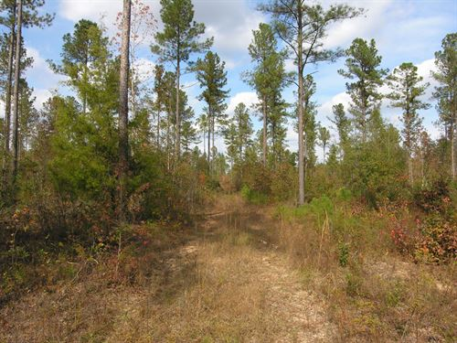 83 Acres Planted Pines, Wooded : Hephzibah : Burke County : Georgia