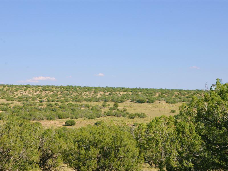 Quiet Secluded Northern Arizona Ran : Saint Johns : Apache County : Arizona