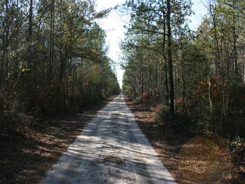 277.22 Acres in Ammon, NC : Ammon : Bladen County : North Carolina