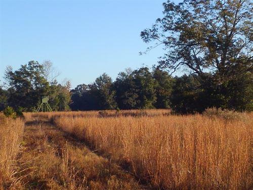 Kirkland Farm : Malone : Jackson County : Florida