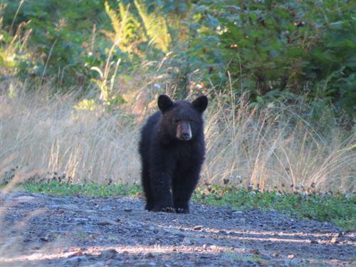 Wheeler Mountain : Granite Falls : Snohomish County : Washington