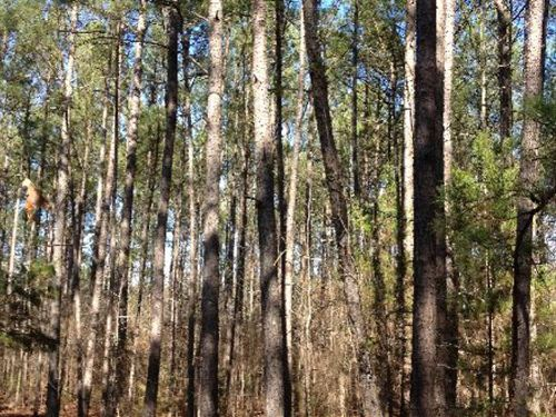 Hartley Tract : Edgefield : South Carolina
