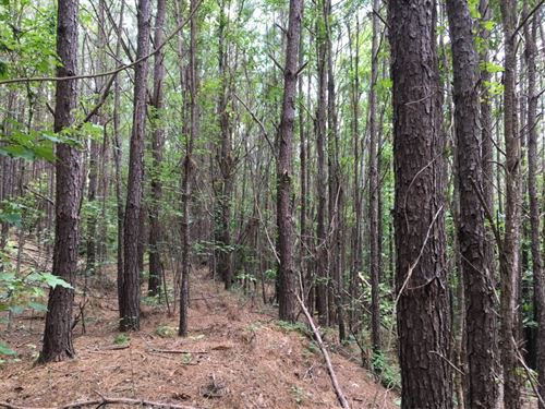 Simmons Hill Tract : Guin : Marion County : Alabama