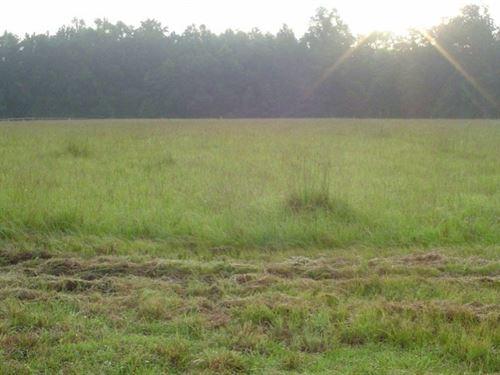 Red Oak Tract : Walterboro : Colleton County : South Carolina