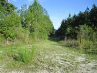 Cr 340 & E231 Sw : Gainesville : Alachua County : Florida
