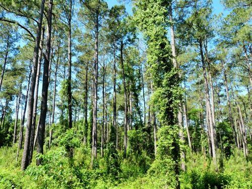Green : Pee Dee : Marion County : South Carolina