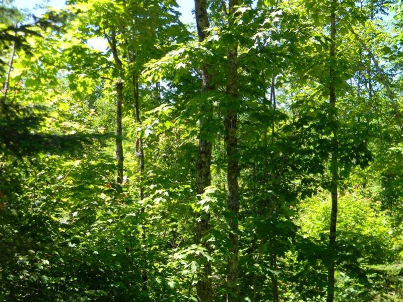 Asumaa Road : Atlantic Mine : Houghton County : Michigan