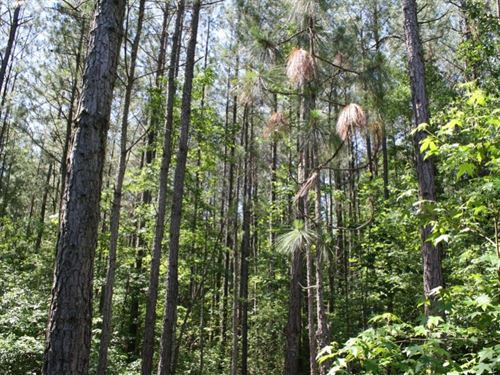 US 401 Tract : Linden : Harnett County : North Carolina