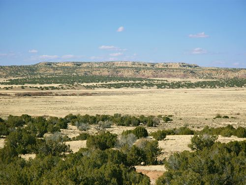Deep Wilderness Arizona Ranch : Saint Johns : Apache County : Arizona