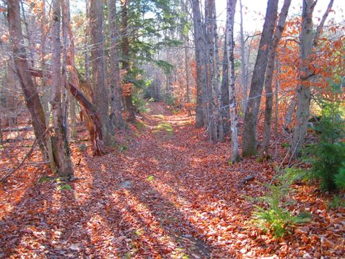 751 Acres in Alexandria, NH : Alexandria : Grafton County : New Hampshire
