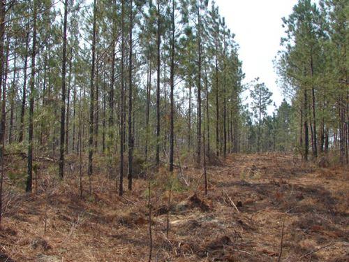 Bailey - Tract : McBee : Chesterfield County : South Carolina