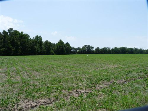 Burnt Branch : Turbeville : Clarendon County : South Carolina