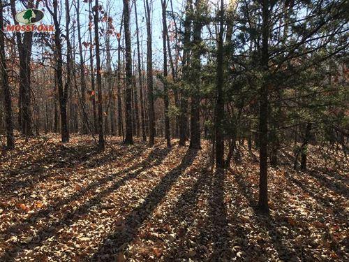 Price Drop, Hunting Tract OR Homes : Ash Flat : Sharp County : Arkansas