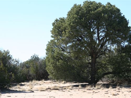 36 Acres Bordering State Trust Land : St Johns : Apache County : Arizona
