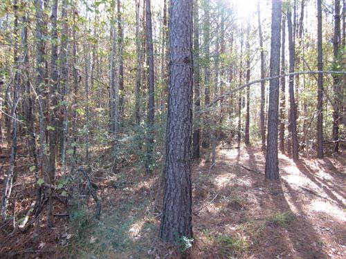 54 Acres In Clarke County, Ms : Shubuta : Clarke County : Mississippi