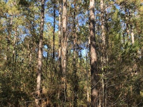 15 Acres On Holloway Road In Prenti : Prentiss : Jefferson Davis County : Mississippi