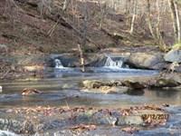 Turn-Key Deer And Turkey Hunting : Rockford : Coosa County : Alabama