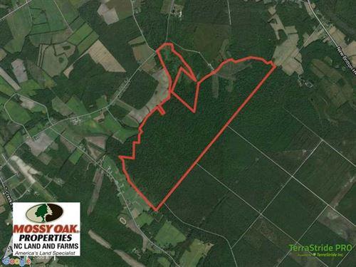 Hunting Land For Sale in Columbus : Nakina : Columbus County : North Carolina