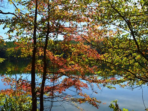 Land With 12 Acre Pond : Talladega : Alabama