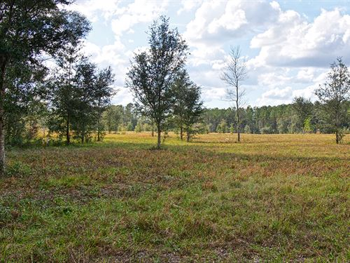 Wiliston Ranch 146 Acres : Williston : Marion County : Florida