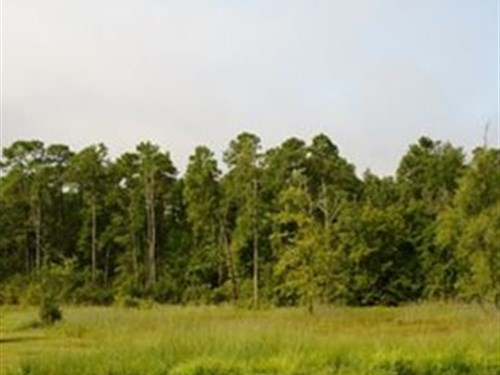 Sc Conservation Easement Acreage : Marion : South Carolina