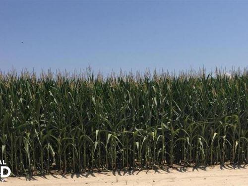 748 Acres Row Crop Farm at Aucti : West Point : White County : Arkansas