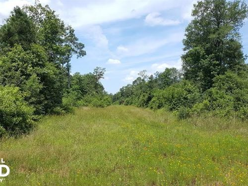 Recreation & Timber/Hunting Investm : Cleveland : San Jacinto County : Texas