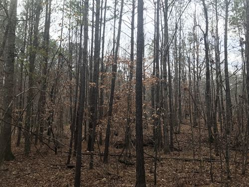 Hunting Retreat : Crawfordville : Taliaferro County : Georgia