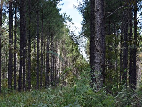 Timber Investment & Hunting Tract : Bastrop : Morehouse Parish : Louisiana