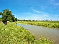 20 Acre Cattle Ranch : Wolfe City : Hunt County : Texas