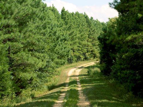 Brigham Forest : Clarksville : Stewart County : Tennessee