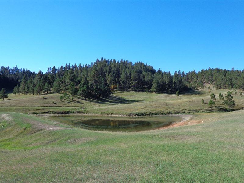 Buck Creek Pasture : Hulett : Crook County : Wyoming