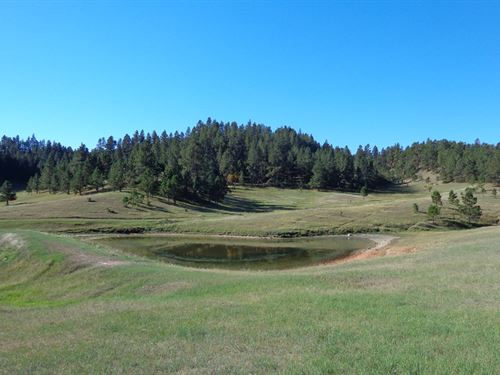 Buck Creek Pasture : Hulett : Crook County : Wyoming