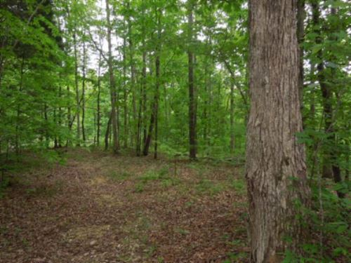 156.13 Ac Totally Wooded,Ideal Hunt : Celina : Clay County : Tennessee