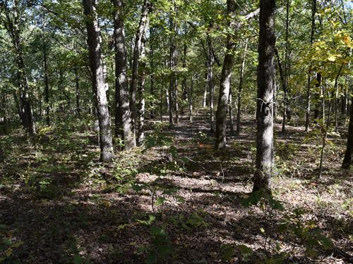 160 Acres - Hunting And Rec Land : Stover : Morgan County : Missouri