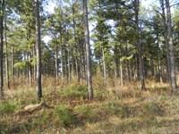 41.66 Acres Of Mature Planted Pine : Carlton : Oglethorpe County : Georgia