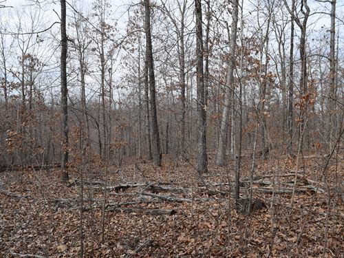 120 Acres - Investment Opportunity : Bunker : Reynolds County : Missouri