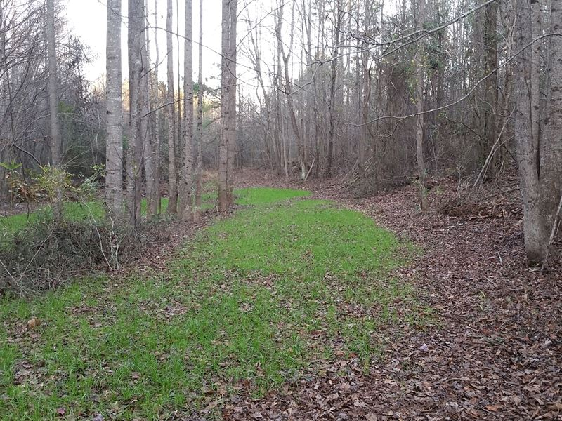 147+/- Acres Timberland Clay County : Ashland : Clay County : Alabama