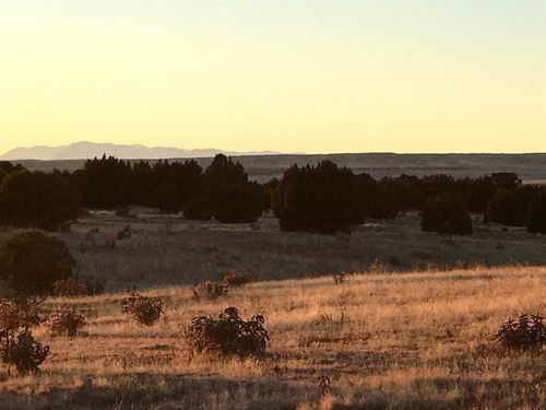 115 Acres In Walsenburg, CO : Walsenburg : Las Animas County : Colorado