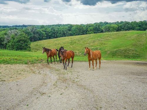Kreashbaum Rd - 217 Acres : Rockbridge : Hocking County : Ohio