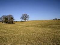 Oak Tree Farm : Louisa : Louisa County : Virginia