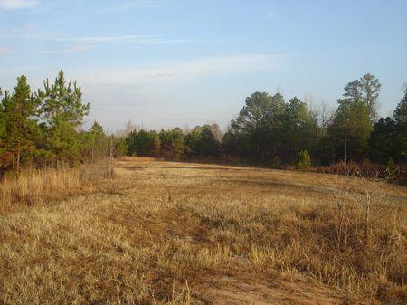 222 Acre Hunting Tract : Deepstep : Washington County : Georgia