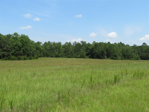 Great Timber And Hunting Tract : Ponce De Leon : Holmes County : Florida
