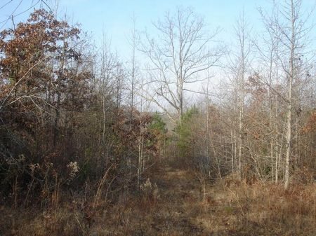Large Homesite Or Hunting Land : Deepstep : Washington County : Georgia